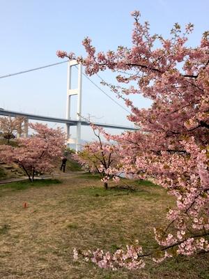 Sakura1403214