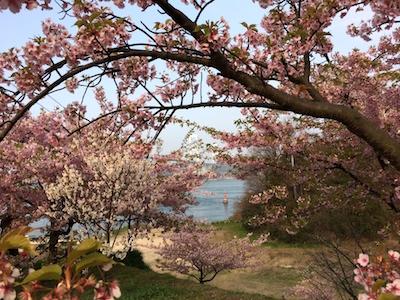 Sakura1403215