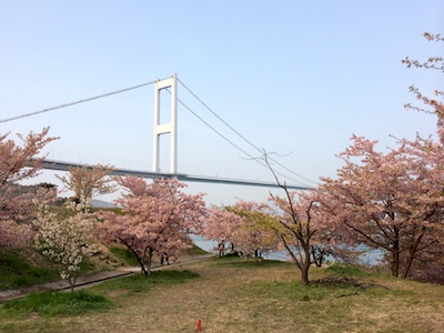 Sakura1403216